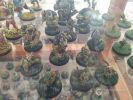 BloodBowl_WC2015-028.jpg